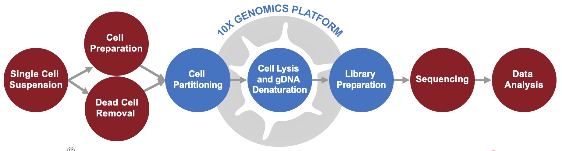 10x-single-cell-CNV-workflow-cell-input